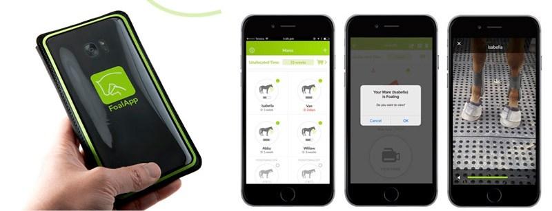 The Foal App