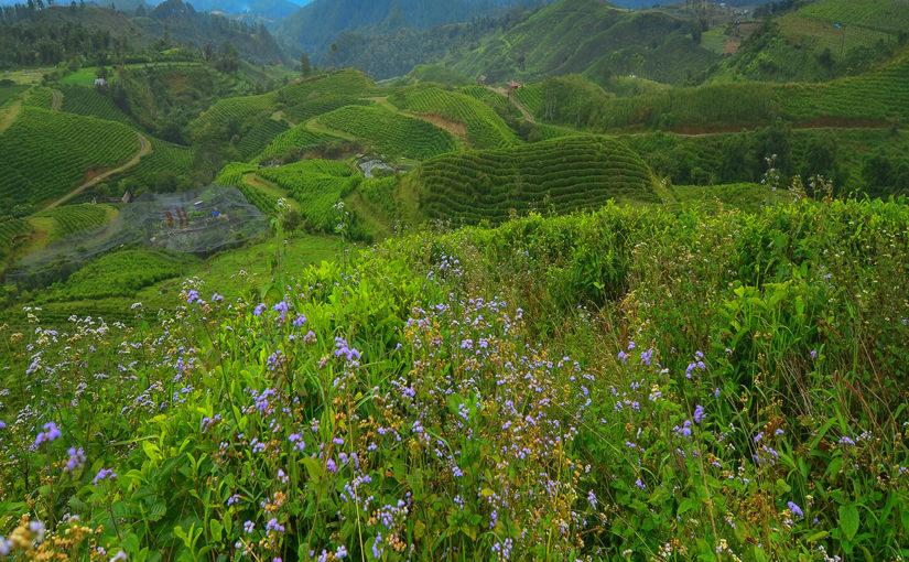 Malino: The City of Flowers