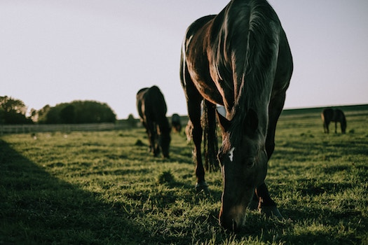 DID YOU KNOW: THE HORSE'S DIGESTIVE SYSTEM