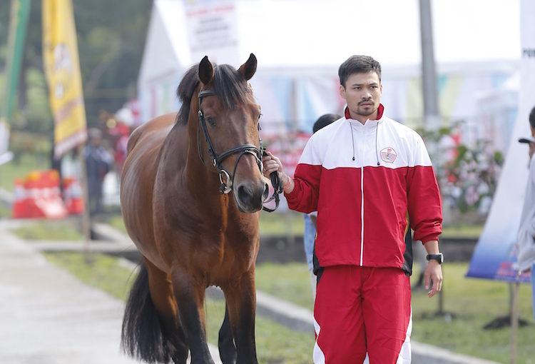 Tata Cara Menuntun Kuda Dengan Benar