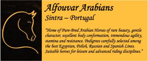 Alfouvar Arabians in Sintra Portugal