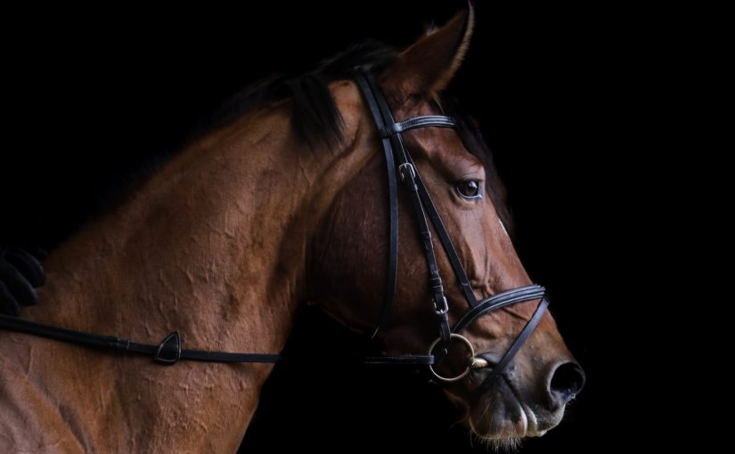 Digitalisation in the equestrian Sport: 5 Innovative Inventions