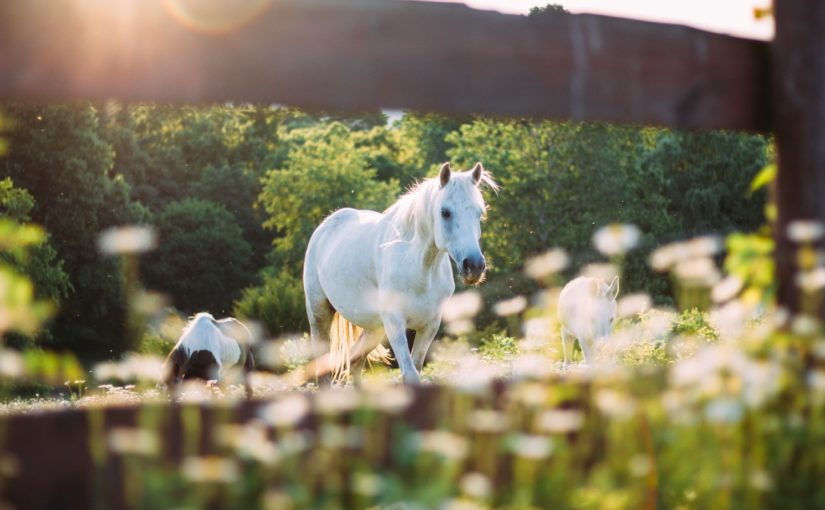 12 Mood and Health boosters for horses