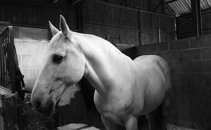 The Lusitano: a Fascinating Portuguese Horse Breed