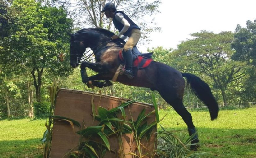 National Equestrian Championships 2018: Marco Wowiling jumps into the Lead!