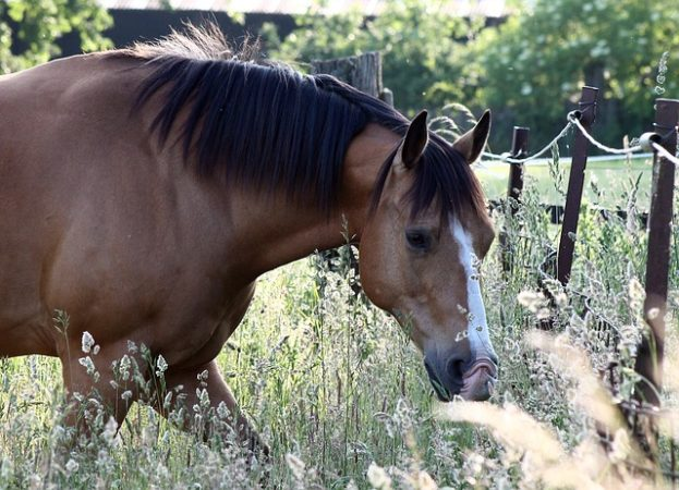 DIY for Horses: Thyme and Herbal cough remedies