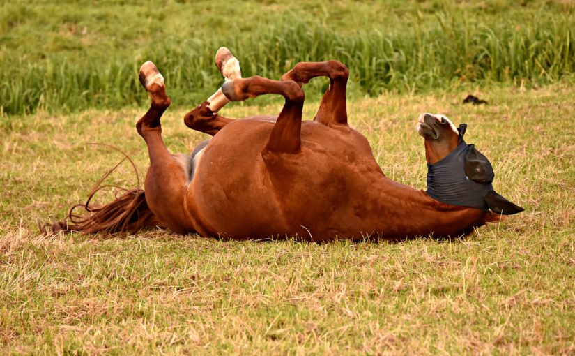 Did You Know: Why horses love rolling in the mud