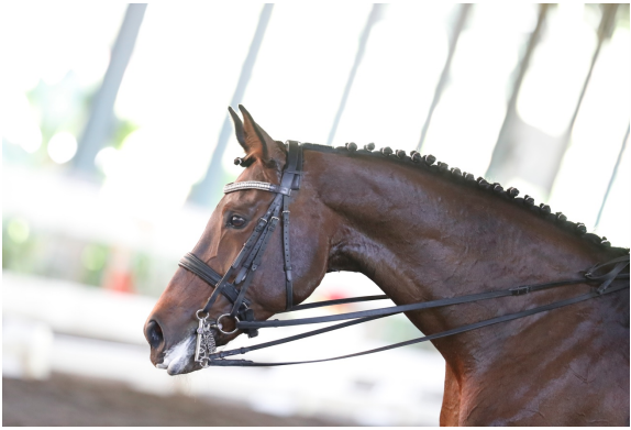 Dressage Competition and Show Jumping Training at JEP
